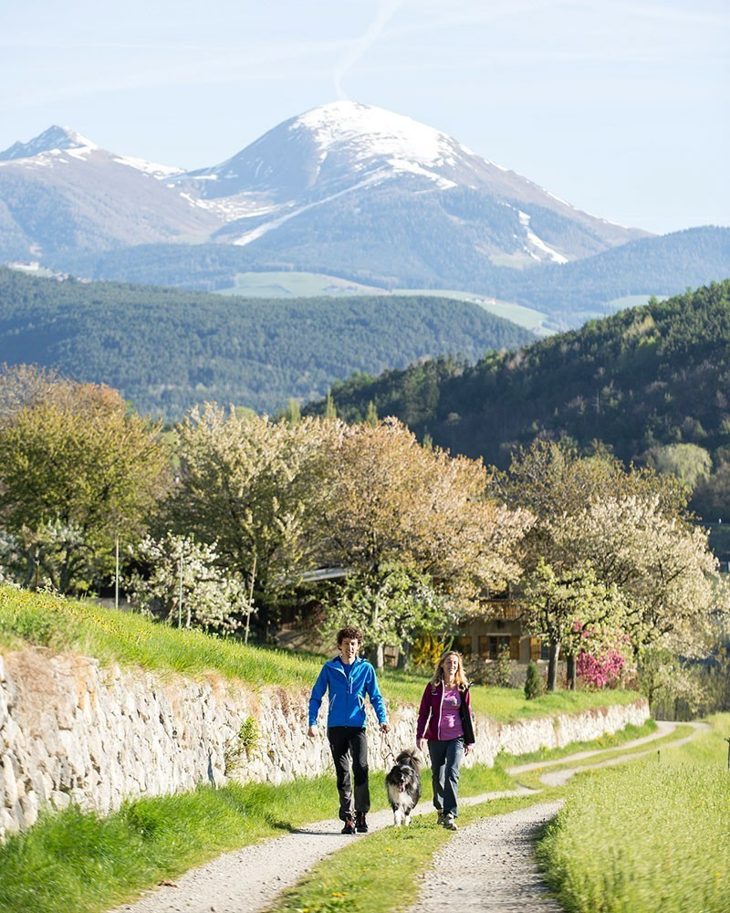 Frühling im Eisacktal Südtirol