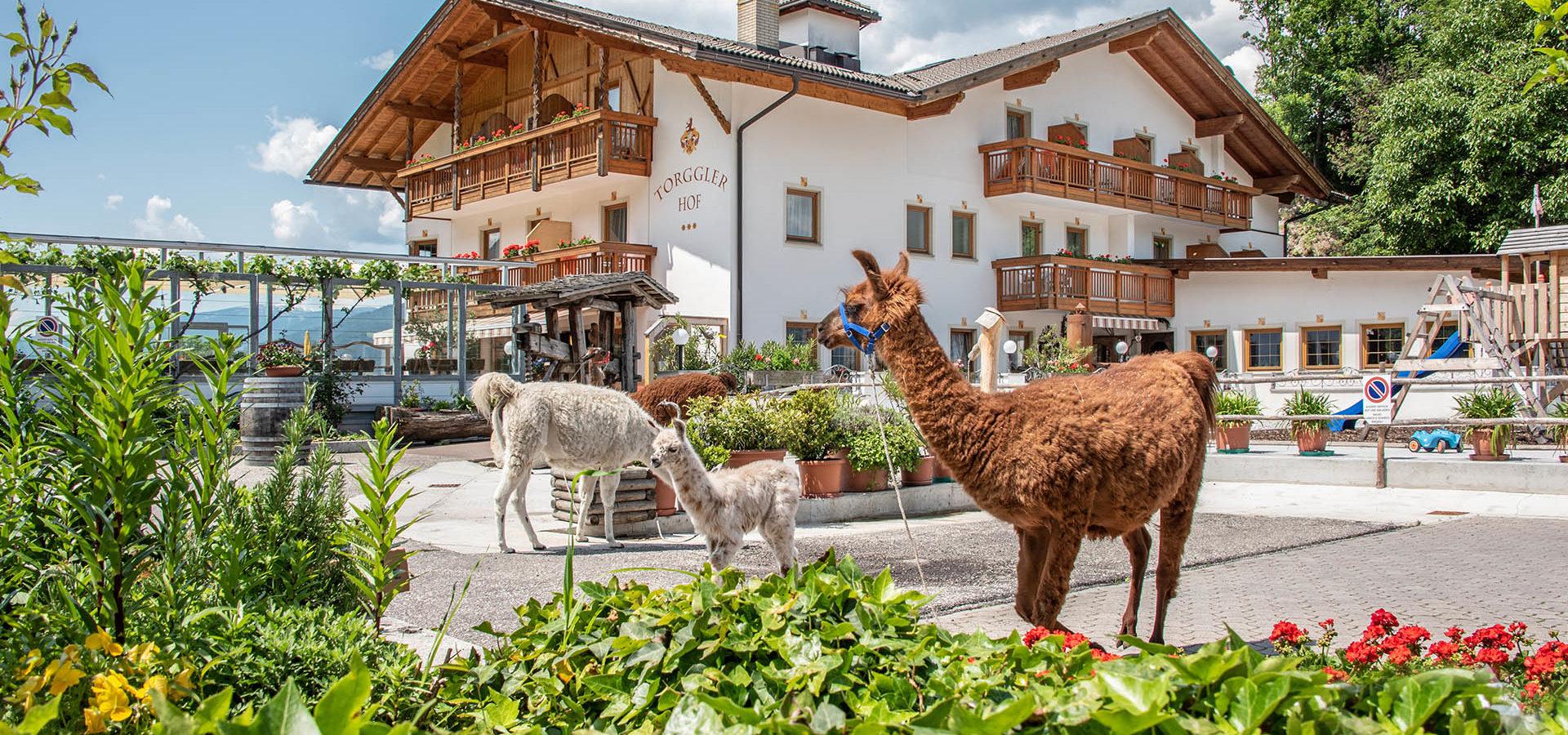 Hotel mit Tieren in Südtirol