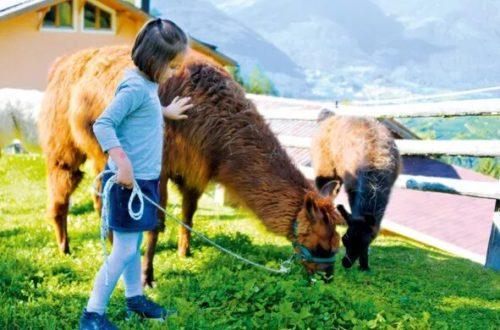 Lamas Torgglerhof Brixen