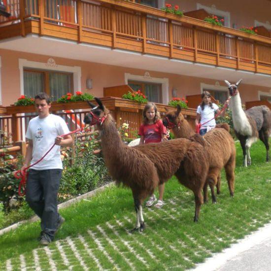 Hotel Animal Lama a Bressanone