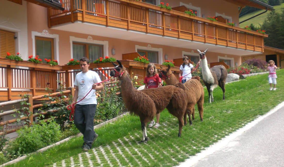 lamas farm hotel